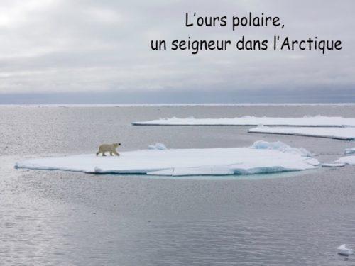 Conférence L'ours polaire un seigneur dans l'Arctique