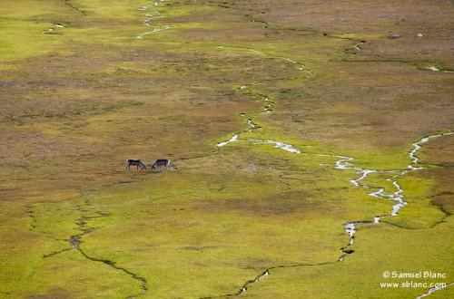 Paysage de toundra au Spitzberg