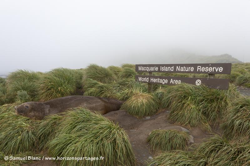 Réserve naturelle de l'île Macquarie