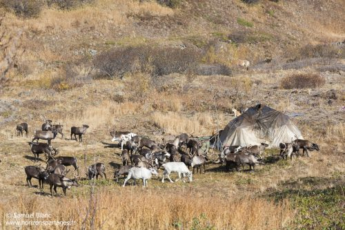 Eleveurs du rennes du Kamtchatka