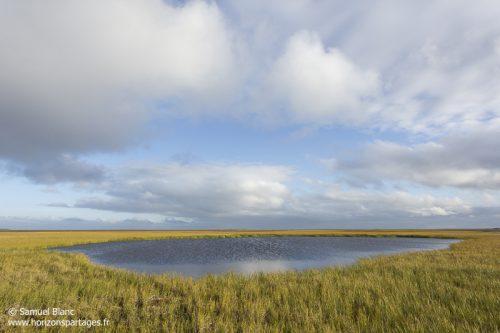 Marais en Tchoukotka