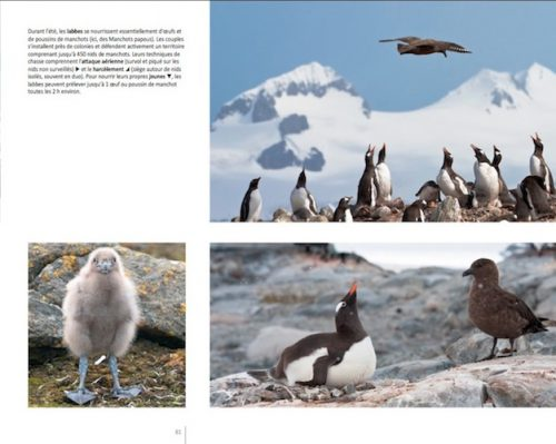 """Book """"Journey to Antarctica"""" page 81"""